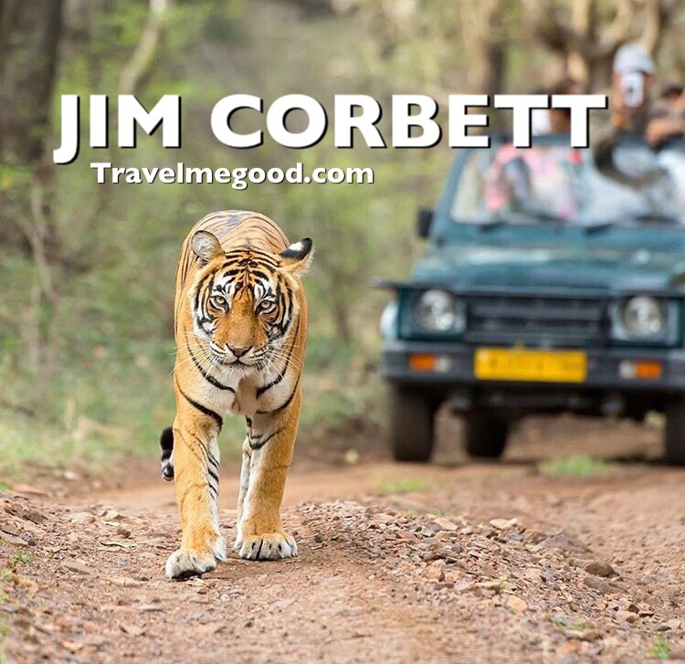 Jim corbett - Places to visit near Delhi - Weekend getaways from delhi -Travel me good - bus on rent car on hire