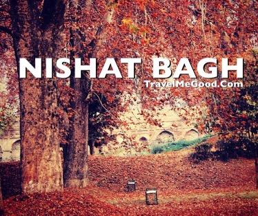 Nishat Bagh, Sri Nagar, Top 10 places to visit in Jammu & Kashmir J&K, Best places, Dal lake, Delhi to Nishat Bagh Jammu kashmir, Bus on rent, Car on rent, Bus on hire